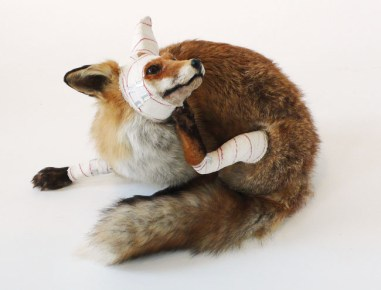 PASCAL BERNIER, Renard, Accident de chasse, 1994-2009, stuffed fox, bandages, acrylic, H. 60 cm © P. Bernier