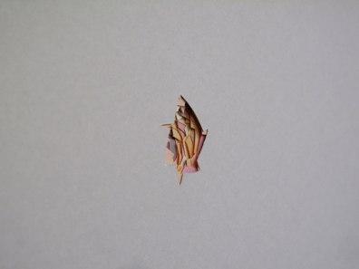Serena Vestrucci, Ritagli di tempo (particolare), 2013, carta, otto moduli, dimensioni variabili, tre mesi Courtesy Otto Zoo