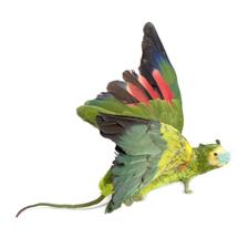 Noemi Montanaro - Tassidermic animal - rat 2013, natural dimensions, unique piece - Contemporary Reload