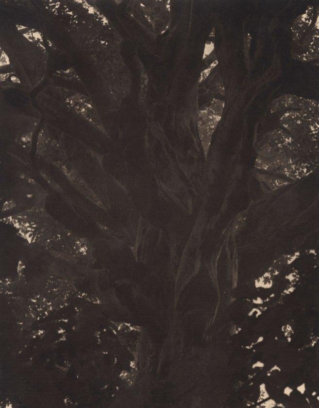 Takeshi Shikama, Silent Respiration of Forests II. Tashirodaira #5, 2006, platinum print on Gampi paper, Ed.9, cm 20.3x25.4