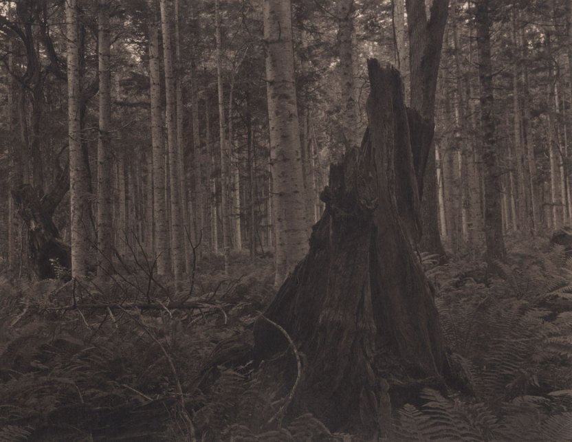 Takeshi Shikama, Silent Respiration of Forests - Hokkaido. Kussyaroko, 2011, platinum print on Gampi paper, Ed.9, cm 20.3x25.4