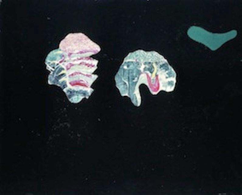 Max Ernst, Coquilles Fleurs, 1928, olio su tela, 65x80.5 cm