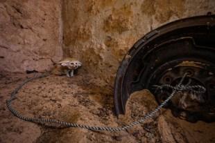 Primo premio Natura Foto Singole, Bruno D'Amicis, Italia per National Geographic 22 aprile 2013, Kebili, Tunisia