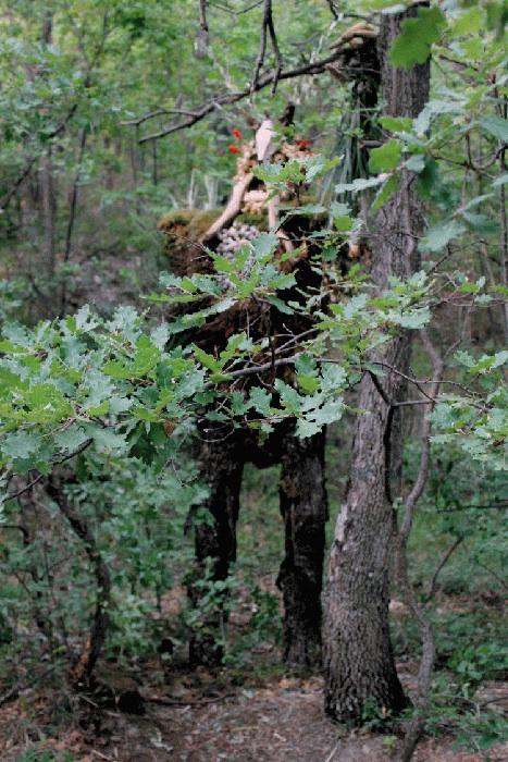 GAP 2012, DEM, Omone, scultura in natura, h. 4.oo metri circa