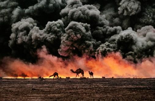 Steve McCurry, Cammelli e giacimenti di petrolio, Kuwait, 1991 © Steve McCurry