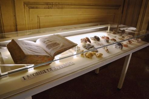 Sissi. Manifesto Anatomico, veduta della mostra presso la Biblioteca Comunale dell'Archiginnasio di Bologna (4), ph. Matteo Monti, courtesy MAMbo. Museo d'Arte Moderna di Bologna
