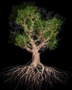 Davide Coltro, Tree G 01