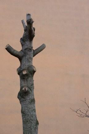 Portati dal vento. Giorgia Valmorri, Galleria Spiazzi, Venezia