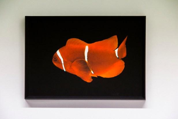 Lia Pascniuc, Vita liquida#33, Stampa fine art su carta cotone Hahnemuhle 33x48cm