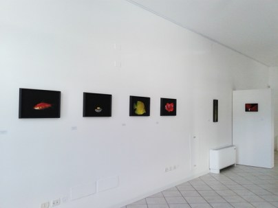 Lia Pascaniuc. Liquid Landscape, veduta dell'allestimento