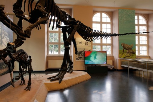 Chiara Lecca. Quod Paret, veduta della mostra, Naturkundemuseum im Ottoneum, Kassel Foto Werner Maschmann (Bowels)