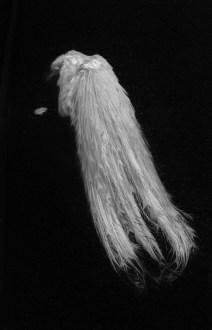 Ilaria Ferretti, Pavone bianco_coda | White peacock_tail