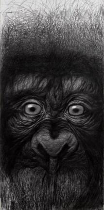 Rezarte Contemporanea - Silvano Scolari, Scimmia Concatenata, grafite su carta