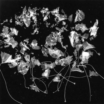 Gohar Dashti, Still Life #4, 2017, archival digital pigment print, photograms b&w, 120x120 cm, cyanotypes (blue print), 97x120 cm, edition of 10 Courtesy the artist and Officine dell'Immagine, Milan