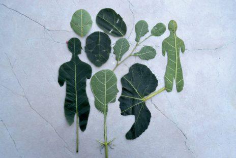 Isobel Blank, Ephemeral, stampa su pannello in pvc e polistirene espanso, 1/10, cm 70x47, 2012