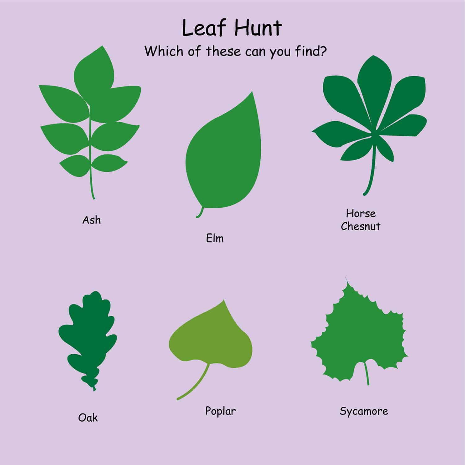Leaf Hunt Nature Board Post Mounted ESP Play