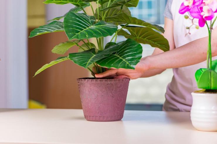 Ubijaju porodičnu sreću i uništavaju harmoniju u kući: Ako imate neku od ovih 9 biljaka, odmah ih izbacite