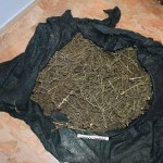 Sei chili di stupefacenti trovati dalla Volante di Pescara in un'abitazione