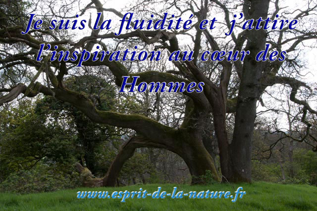fluidite-inspiration-30-11-2016