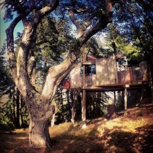 Dodo dans les arbres à Big Sur