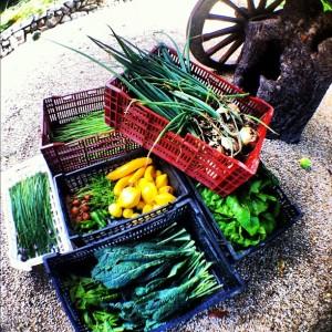Légumes du potager aux USA