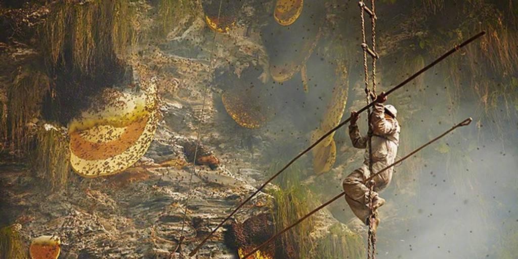 abeilles-de l-Himalaya