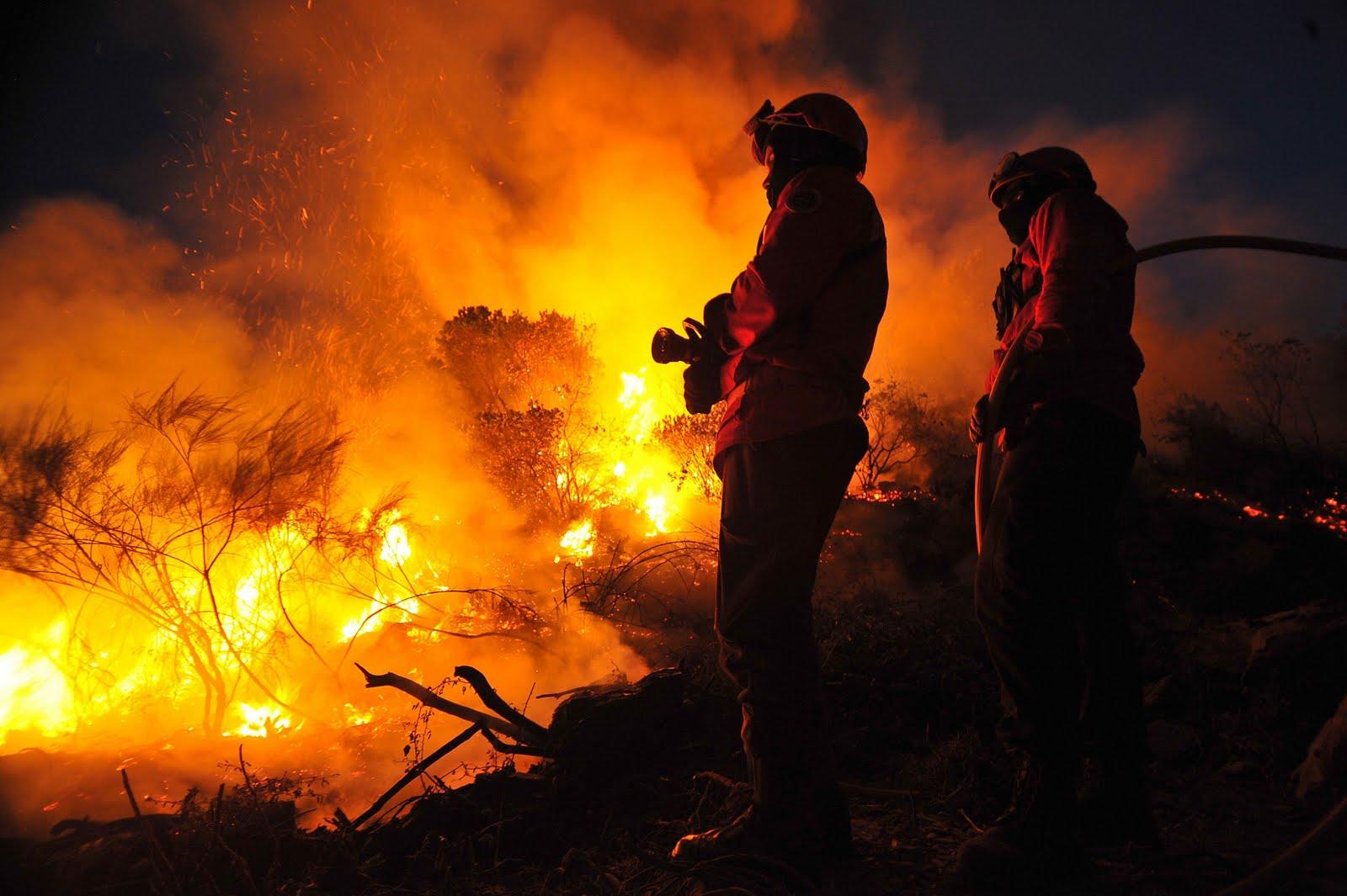 Resultado de imagem para incêndios florestais