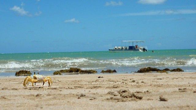 Praias de Maceió, Praia de Ipioca (Foto: Esse Mundo É Nosso)