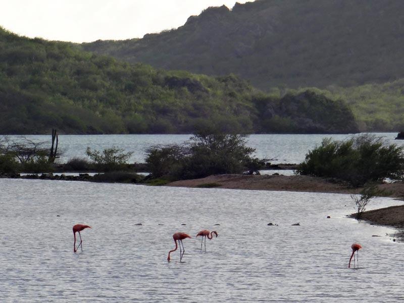 Flamingos em Curaçao (Foto: Esse Mundo É Nosso)