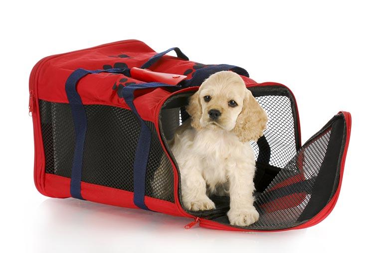 10 dicas pra viajar com cachorro ou gato de avião (Foto via Shutterstock)