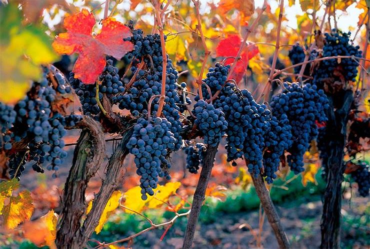 Visita à vinícola Concha y Toro no Chile (Foto: Divulgação)