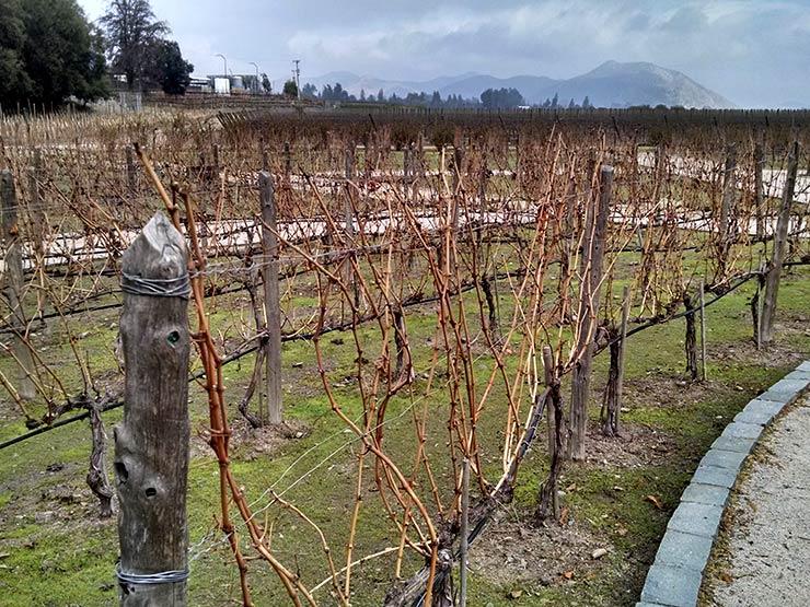 Visita à vinícola Concha y Toro no Chile (Foto: Henrique Bezerra/Esse Mundo É Nosso)