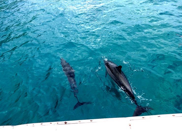 Golfinhos em Noronha (Foto: Esse Mundo é Nosso)