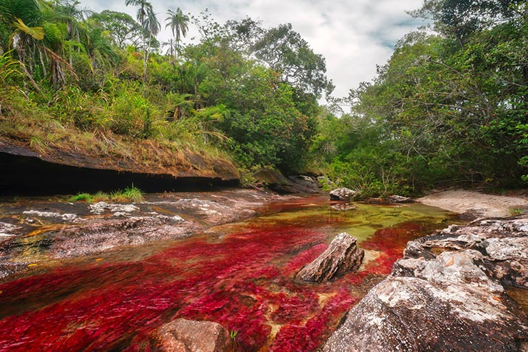 Caño Cristales, o rio de 5 cores na Colômbia [Foto por Mario Carvajal (cc) 2012]