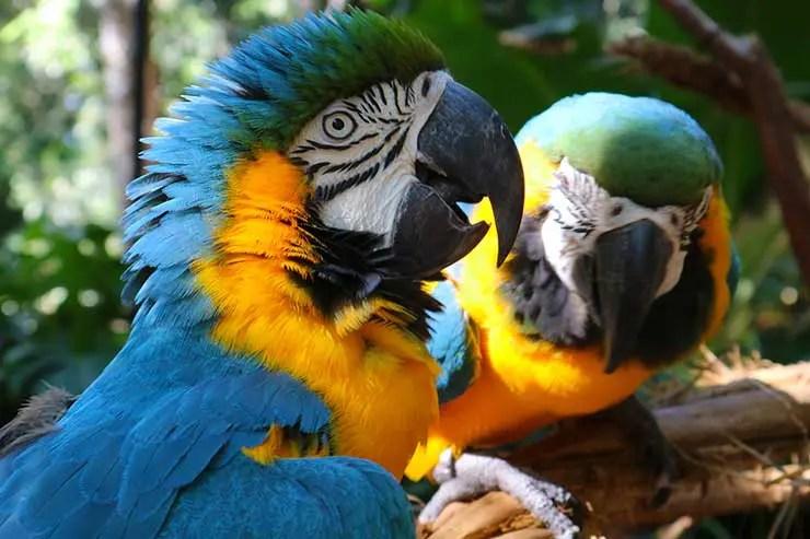 Parque das Aves (Foto: Esse Mundo é Nosso)