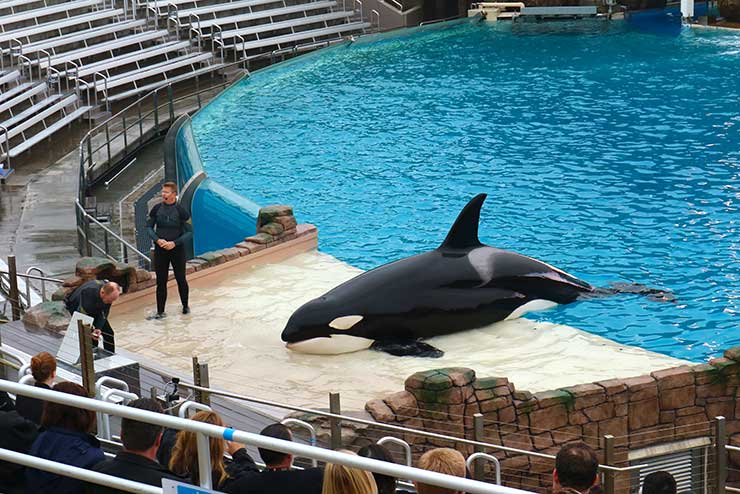 SeaWorld San Diego (Foto: Esse Mundo é Nosso)