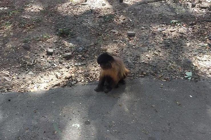 Zoo Safári (Foto: Esse Mundo é Nosso)