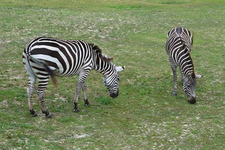 Busch Gardens (Foto: Esse Mundo é Nosso)