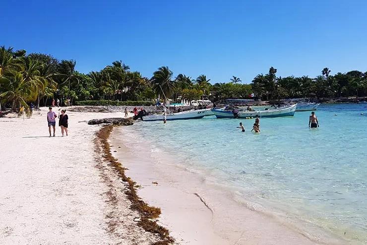 Sargaço, as algas do Caribe (Foto: Esse Mundo É Nosso)