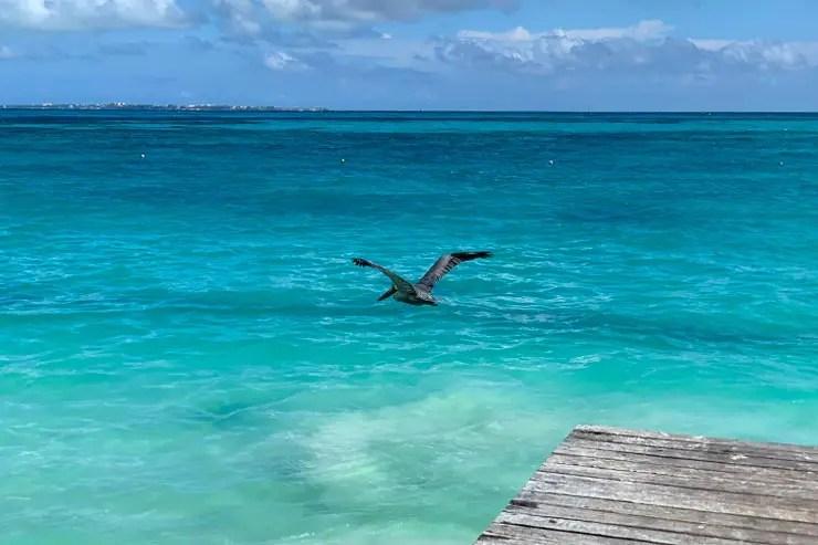 Mar esverdeado na praia Caracoles, em Cancún (Foto: Esse Mundo é Nosso)