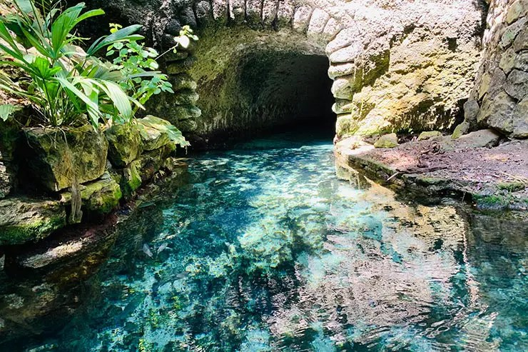 Rio subterrâneo com água esverdeada com árvores e folhas no Xcaret (Foto: Esse Mundo é Nosso)