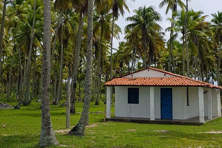 Fazenda e coqueirais em Boipeba (Foto: Esse Mundo É Nosso)
