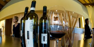Winery, Umbria, Italy