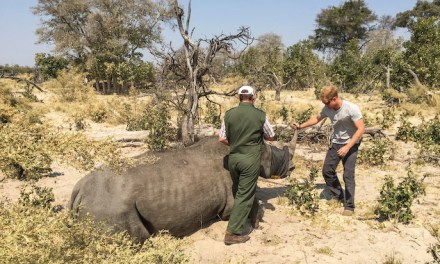 Prince Harry endorses Rhino Conservation Botswana with award-winning luxury safari operator, Wilderness Safaris