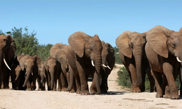 5 things you (possibly) didn't know about elephants