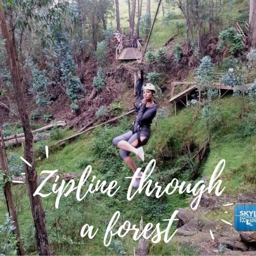 Zipline Through the Forest