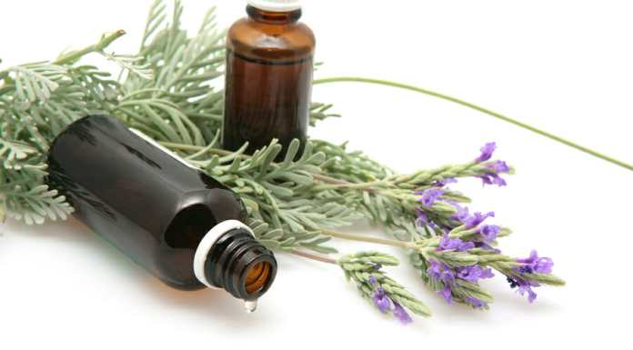 lavender oil and lavender flowers on white background