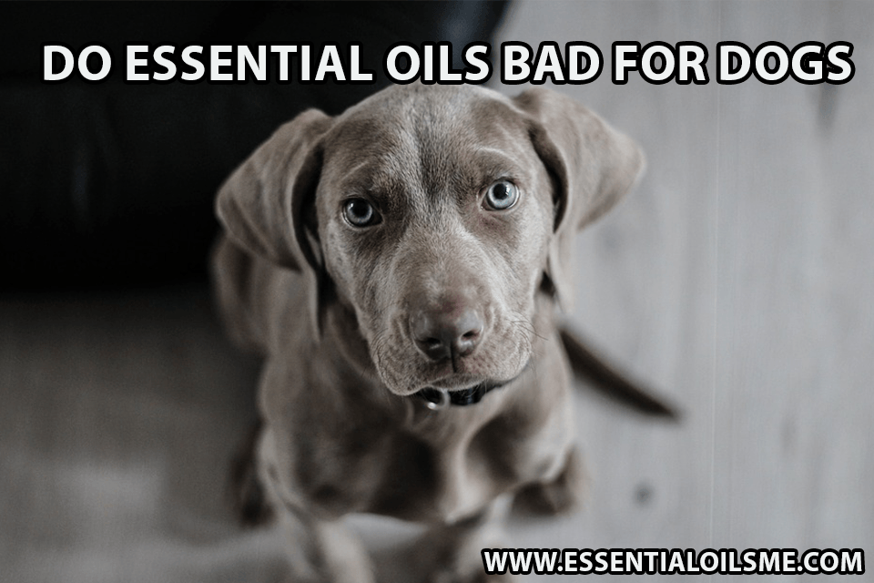essential oils bad for dogs