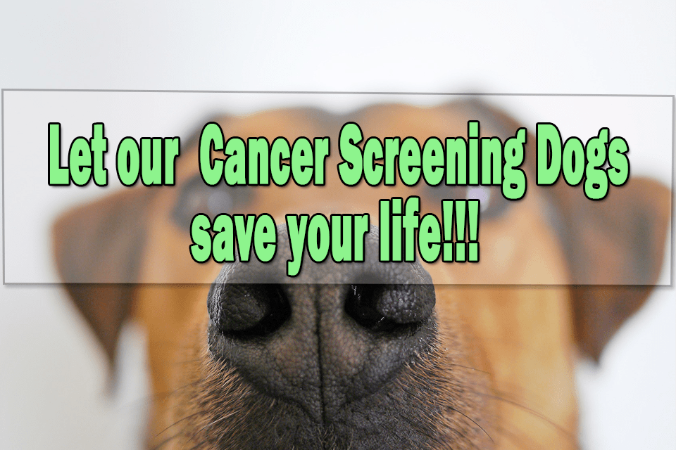 cancer screening dogs