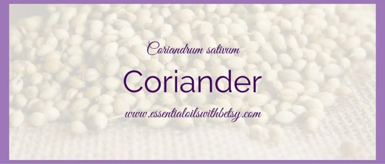 Coriander essential oil has a wonderfully fresh and herbal aroma. It is extracted from the seed of the coriander plant by steam distillation. The plant is an herb that you could grow in your garden, and grows about three feet high.